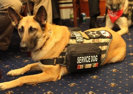 servicedog.jpeg